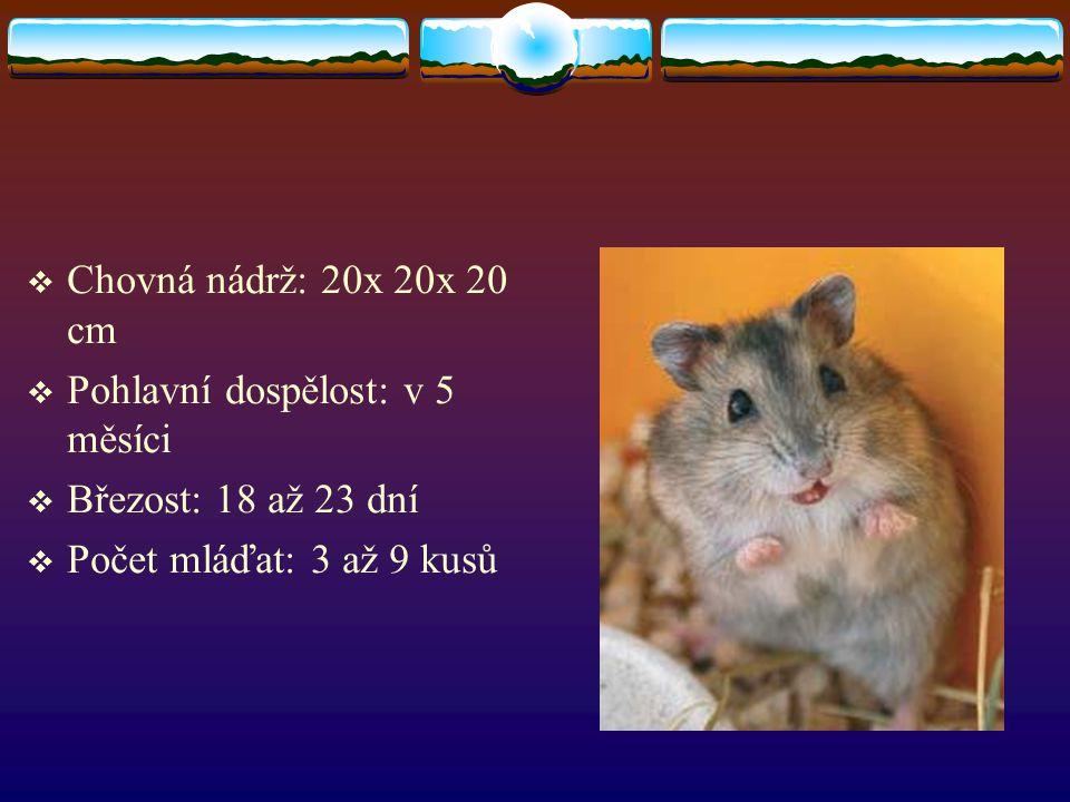  Chovná nádrž: 20x 20x 20 cm  Pohlavní dospělost: v 5 měsíci  Březost: 18 až 23 dní  Počet mláďat: 3 až 9 kusů