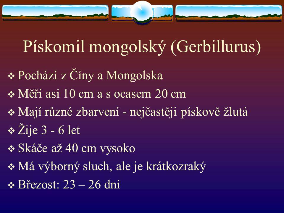 Pískomil mongolský (Gerbillurus)  Pochází z Číny a Mongolska  Měří asi 10 cm a s ocasem 20 cm  Mají různé zbarvení - nejčastěji pískově žlutá  Žij