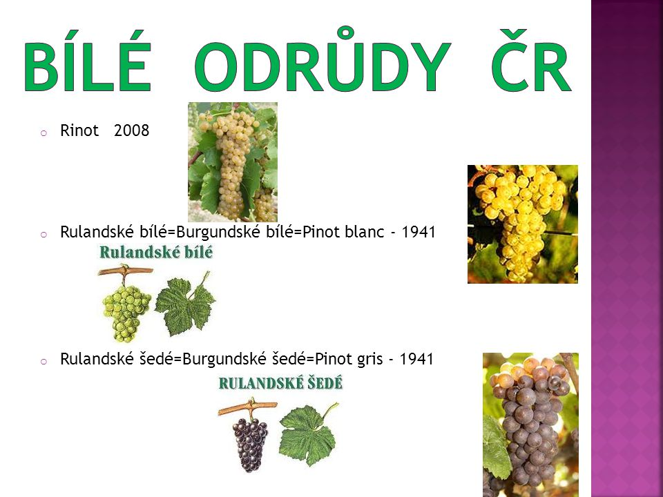 o Rinot 2008 o Rulandské bílé=Burgundské bílé=Pinot blanc - 1941 o Rulandské šedé=Burgundské šedé=Pinot gris - 1941