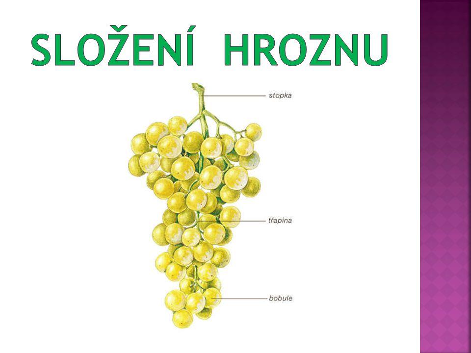 1/ Z jakých částí se skládá rostlina révy vinné.2/ Co je plodem révy vinné.