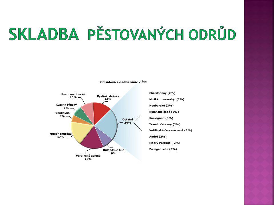 www.vinotekaprosek.cz www.wikipedie.org www.vinazmoravy.cz www.i.dnes.z www.lidovky.cz www.trhvin.cz Vlastní zdroje autora