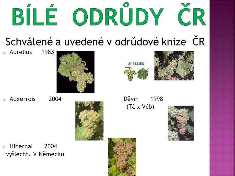 Schválené a uvedené v odrůdové knize ČR o Aurelius 1983 o Auxerrois 2004 Děvín 1998 (Tč x Včb) o Hibernal 2004 vyšlecht.