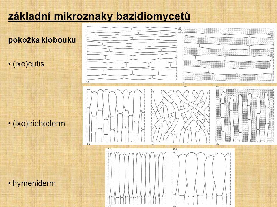 základní mikroznaky bazidiomycetů pokožka klobouku (ixo)cutis (ixo)trichoderm hymeniderm