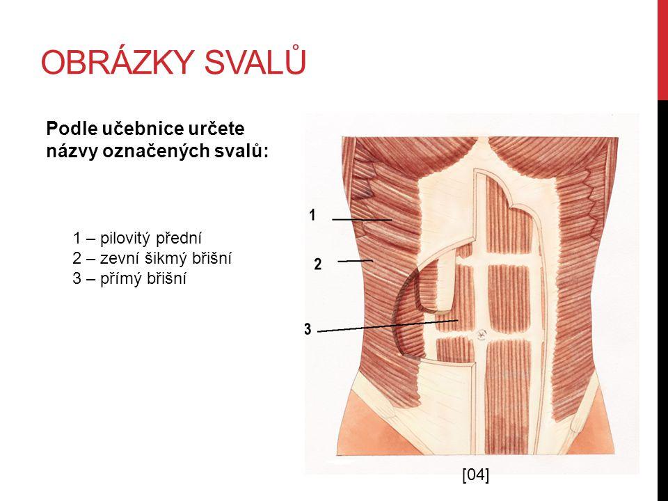 OBRÁZKY SVALŮ Podle učebnice určete názvy označených svalů: 1 – pilovitý přední 2 – zevní šikmý břišní 3 – přímý břišní [04]