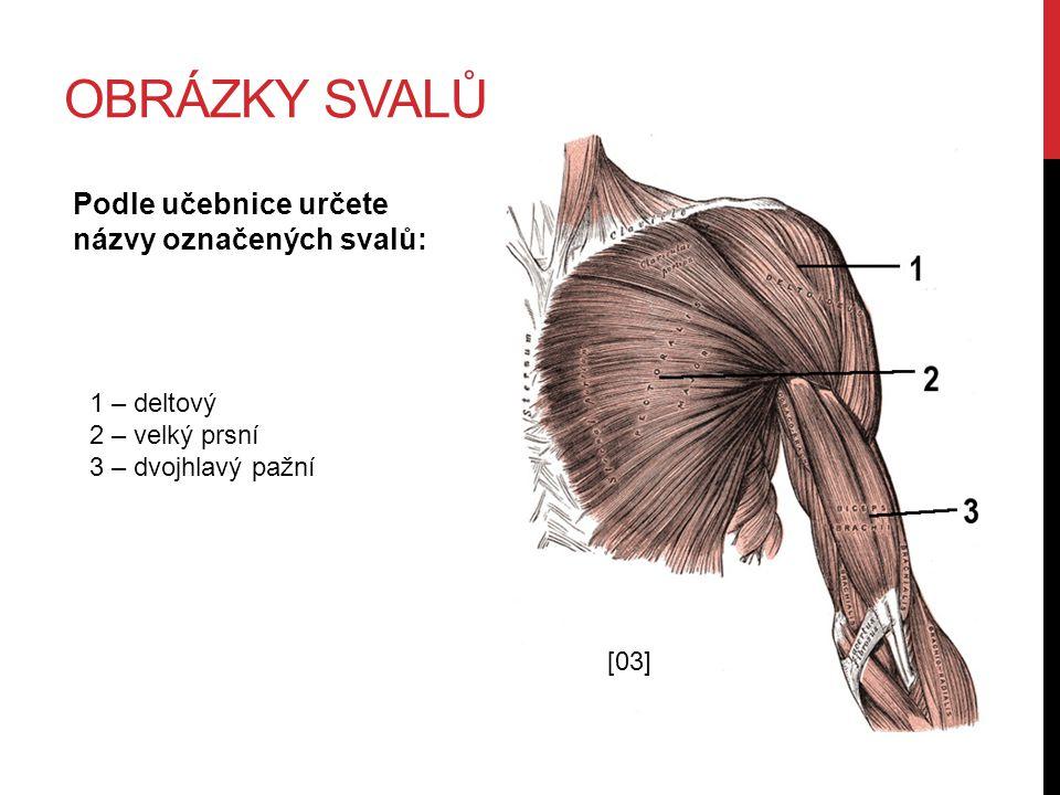 OBRÁZKY SVALŮ Podle učebnice určete názvy označených svalů: 1 – deltový 2 – velký prsní 3 – dvojhlavý pažní [03]