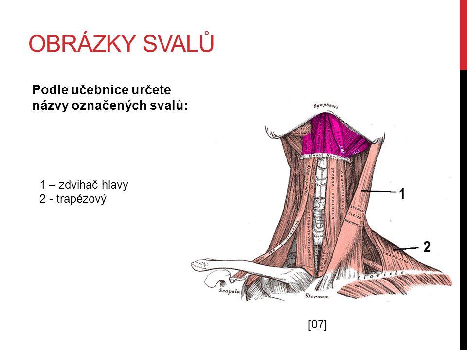 OBRÁZKY SVALŮ Podle učebnice určete názvy označených svalů: 1 – krejčovský 2 – čtyřhlavý stehenní 3 – velký přitahovač stehna 4 – přední holenní [06]
