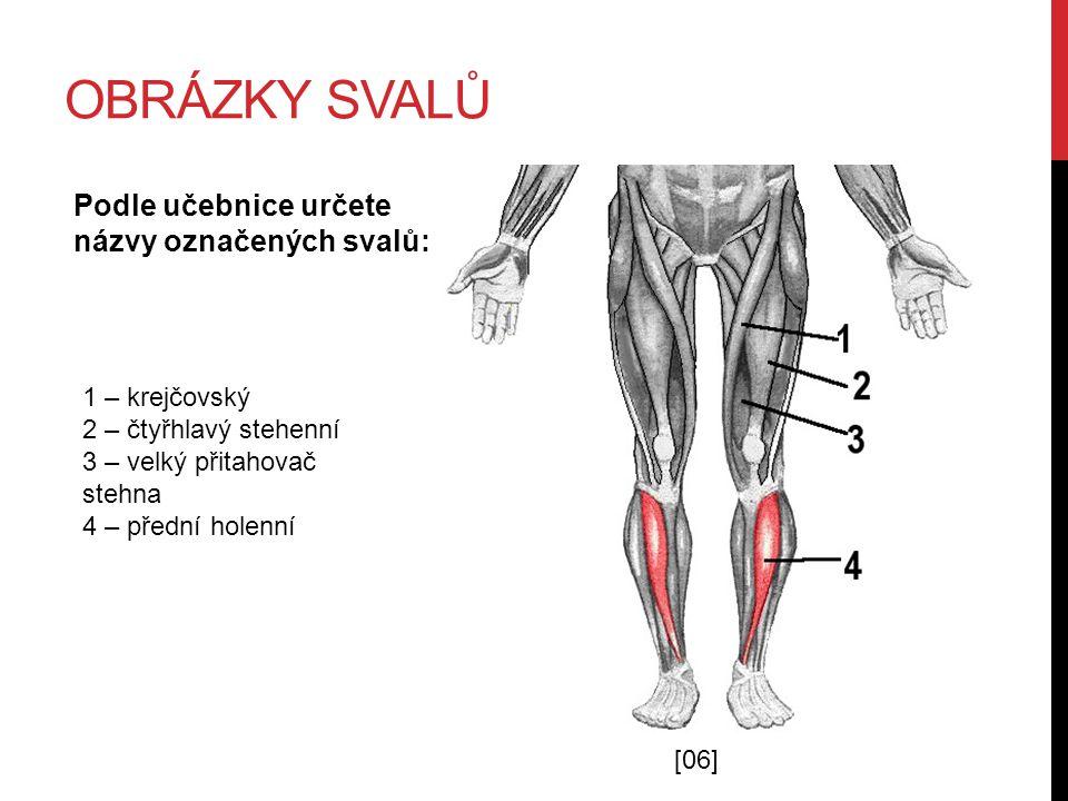 OBRÁZKY SVALŮ Podle učebnice určete názvy označených svalů: 1 – deltový 2 – trapézový 3 – trojhlavý pažní 4 – široký zádový 5 – velký hýžďový [08]