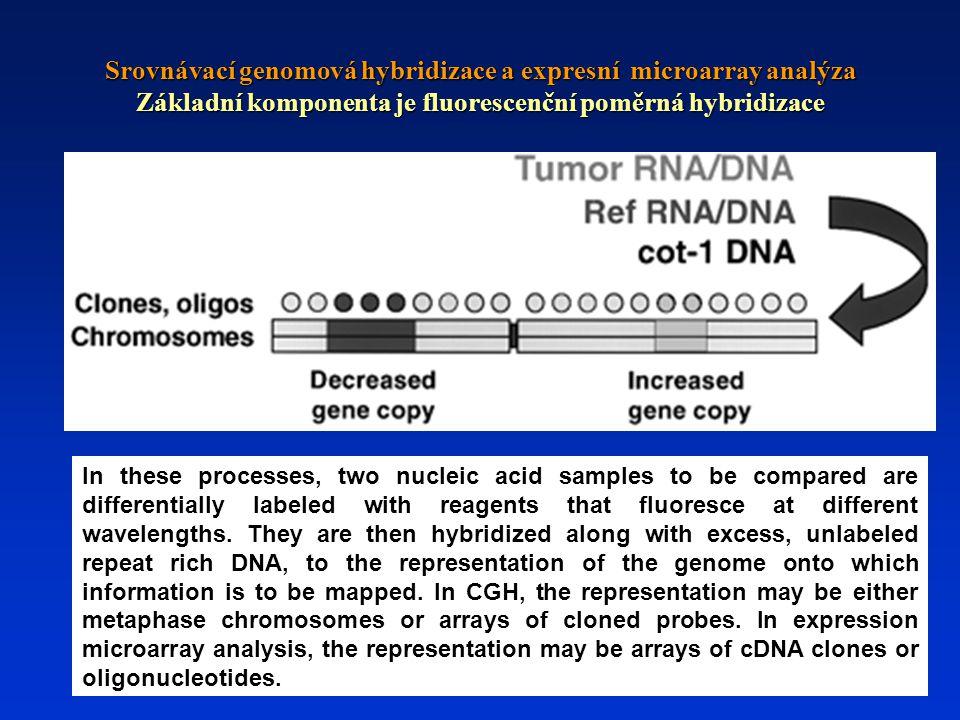 Srovnávací genomová hybridizace a expresní microarray analýza Základní komponenta je fluorescenční poměrná hybridizace In these processes, two nucleic