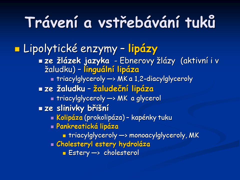 Trávení a vstřebávání tuků Lipolytické enzymy – lipázy Lipolytické enzymy – lipázy ze žlázek jazyka - Ebnerovy žlázy (aktivní i v žaludku) – linguální lipáza ze žlázek jazyka - Ebnerovy žlázy (aktivní i v žaludku) – linguální lipáza triacylglyceroly —> MK a 1,2-diacylglyceroly triacylglyceroly —> MK a 1,2-diacylglyceroly ze žaludku – žaludeční lipáza ze žaludku – žaludeční lipáza triacylglyceroly —> MK a glycerol triacylglyceroly —> MK a glycerol ze slinivky břišní ze slinivky břišní Kolipáza (prokolipáza) – kapénky tuku Kolipáza (prokolipáza) – kapénky tuku Pankreatická lipáza Pankreatická lipáza triacylglyceroly —> monoacylglyceroly, MK triacylglyceroly —> monoacylglyceroly, MK Cholesteryl estery hydroláza Cholesteryl estery hydroláza Estery —> cholesterol Estery —> cholesterol