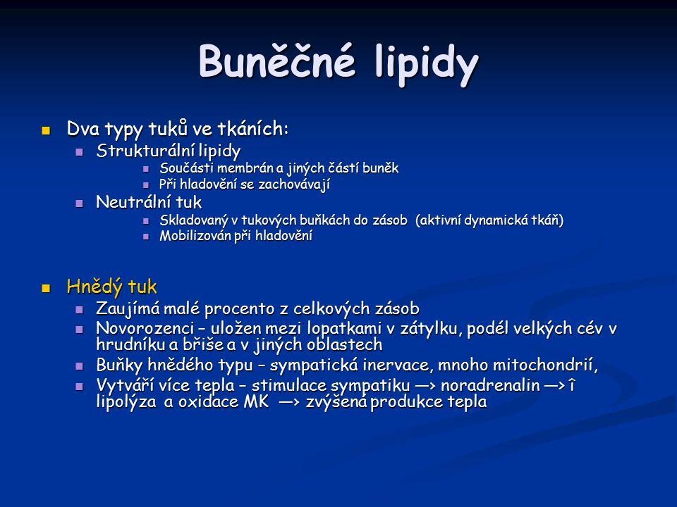 Buněčné lipidy Dva typy tuků ve tkáních: Dva typy tuků ve tkáních: Strukturální lipidy Strukturální lipidy Součásti membrán a jiných částí buněk Součásti membrán a jiných částí buněk Při hladovění se zachovávají Při hladovění se zachovávají Neutrální tuk Neutrální tuk Skladovaný v tukových buňkách do zásob (aktivní dynamická tkáň) Skladovaný v tukových buňkách do zásob (aktivní dynamická tkáň) Mobilizován při hladovění Mobilizován při hladovění Hnědý tuk Hnědý tuk Zaujímá malé procento z celkových zásob Zaujímá malé procento z celkových zásob Novorozenci – uložen mezi lopatkami v zátylku, podél velkých cév v hrudníku a břiše a v jiných oblastech Novorozenci – uložen mezi lopatkami v zátylku, podél velkých cév v hrudníku a břiše a v jiných oblastech Buňky hnědého typu – sympatická inervace, mnoho mitochondrií, Buňky hnědého typu – sympatická inervace, mnoho mitochondrií, Vytváří více tepla – stimulace sympatiku —› noradrenalin —> î lipolýza a oxidace MK —› zvýšená produkce tepla Vytváří více tepla – stimulace sympatiku —› noradrenalin —> î lipolýza a oxidace MK —› zvýšená produkce tepla