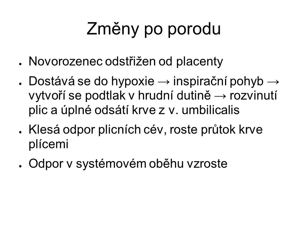 Změny po porodu ● Novorozenec odstřižen od placenty ● Dostává se do hypoxie → inspirační pohyb → vytvoří se podtlak v hrudní dutině → rozvinutí plic a