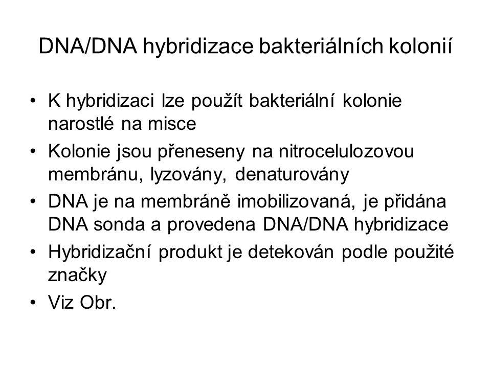 DNA/DNA hybridizace bakteriálních kolonií K hybridizaci lze použít bakteriální kolonie narostlé na misce Kolonie jsou přeneseny na nitrocelulozovou membránu, lyzovány, denaturovány DNA je na membráně imobilizovaná, je přidána DNA sonda a provedena DNA/DNA hybridizace Hybridizační produkt je detekován podle použité značky Viz Obr.