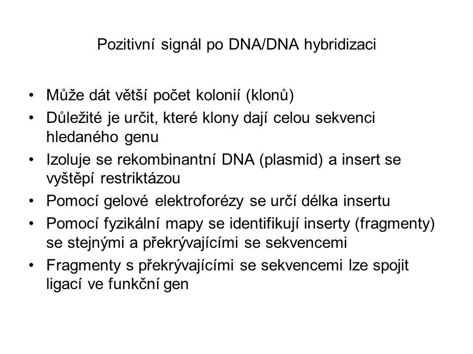 Pozitivní signál po DNA/DNA hybridizaci Může dát větší počet kolonií (klonů) Důležité je určit, které klony dají celou sekvenci hledaného genu Izoluje se rekombinantní DNA (plasmid) a insert se vyštěpí restriktázou Pomocí gelové elektroforézy se určí délka insertu Pomocí fyzikální mapy se identifikují inserty (fragmenty) se stejnými a překrývajícími se sekvencemi Fragmenty s překrývajícími se sekvencemi lze spojit ligací ve funkční gen