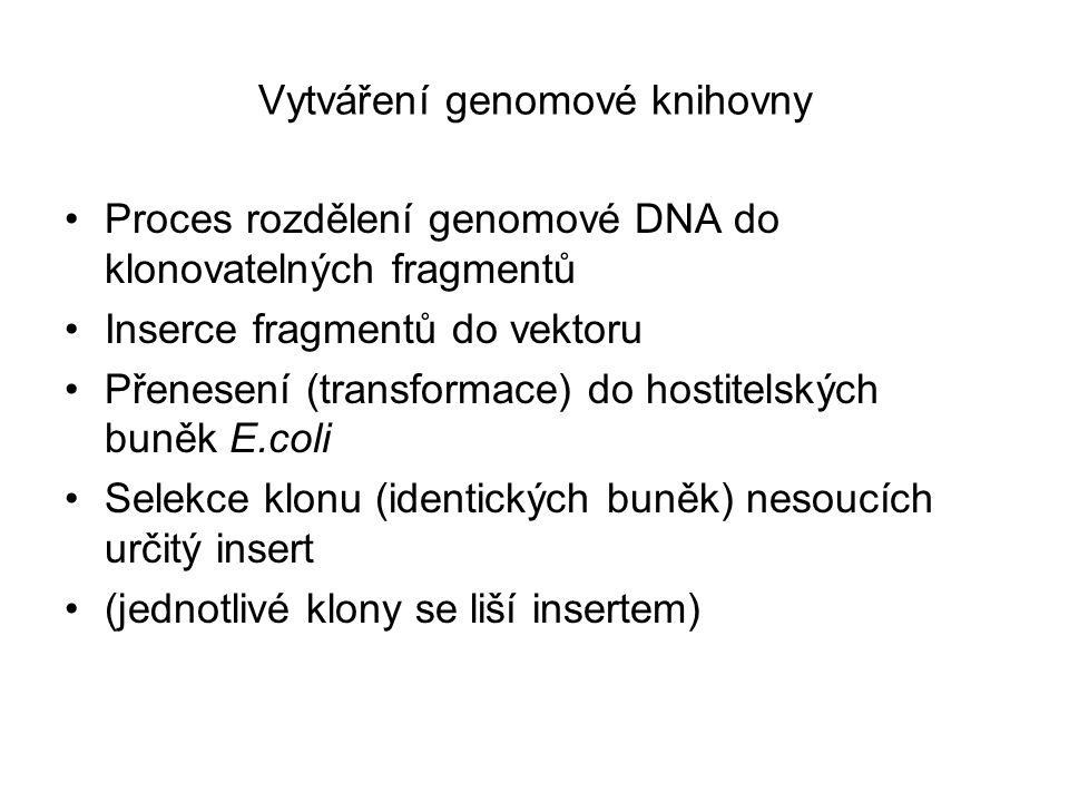 Vytváření genomové knihovny Proces rozdělení genomové DNA do klonovatelných fragmentů Inserce fragmentů do vektoru Přenesení (transformace) do hostitelských buněk E.coli Selekce klonu (identických buněk) nesoucích určitý insert (jednotlivé klony se liší insertem)
