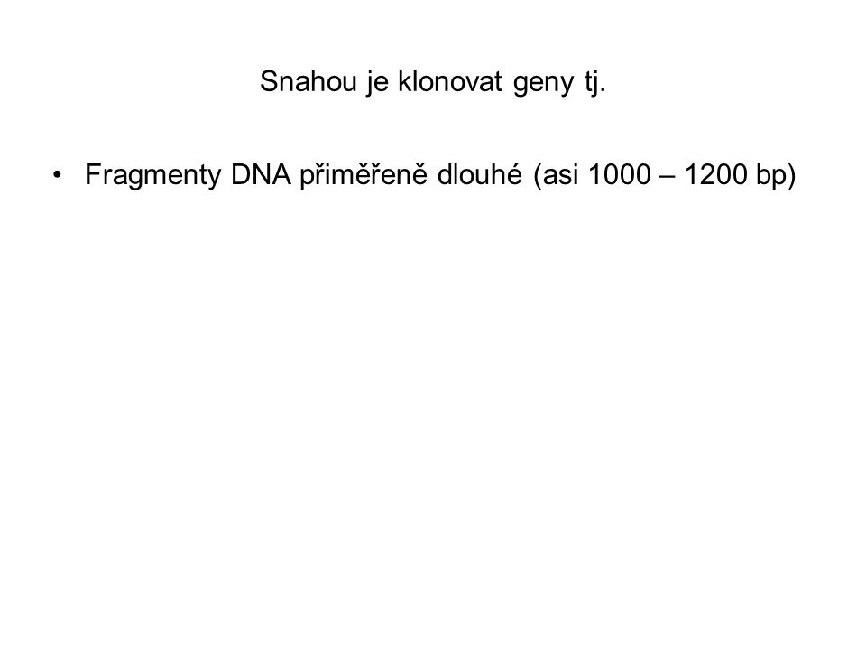 Jakou restriktázu zvolit pro štěpení genomové DNA Restriktázy, co rozpoznávají 4 bp sekvence štěpí na malé kousky (každých 256 bp) Restriktázy, co rozpoznávají 6 bp sekvence štěpí na velké kousky (každých 4096 bp)
