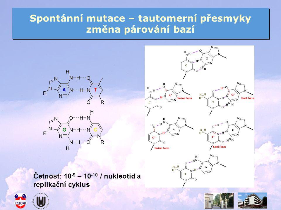 Spontánní mutace – tautomerní přesmyky změna párování bazí Četnost: 10 -9 – 10 -10 / nukleotid a replikační cyklus
