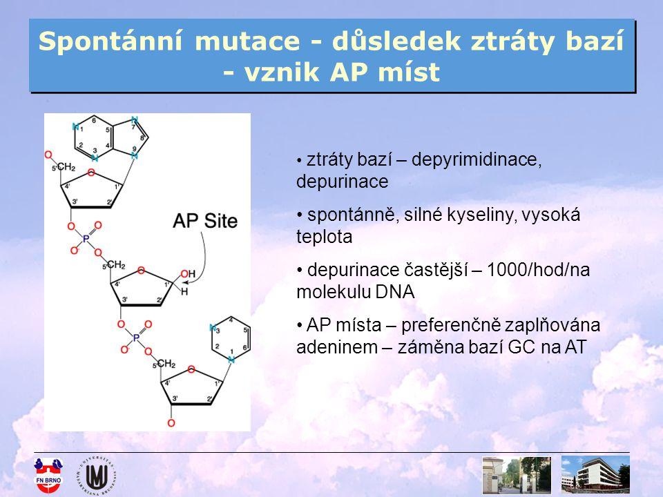 Spontánní mutace - důsledek ztráty bazí - vznik AP míst ztráty bazí – depyrimidinace, depurinace spontánně, silné kyseliny, vysoká teplota depurinace