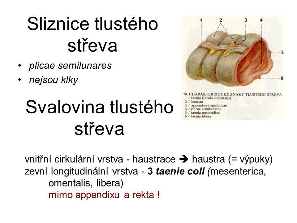 Sliznice tlustého střeva plicae semilunares nejsou klky Svalovina tlustého střeva vnitřní cirkulární vrstva - haustrace  haustra (= výpuky) zevní longitudinální vrstva - 3 taenie coli (mesenterica, omentalis, libera) mimo appendixu a rekta !