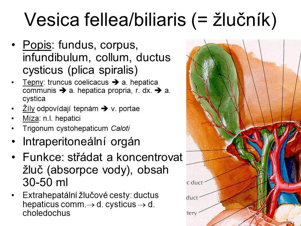 Vesica fellea/biliaris (= žlučník) Popis: fundus, corpus, infundibulum, collum, ductus cysticus (plica spiralis) Tepny: truncus coelicacus  a.