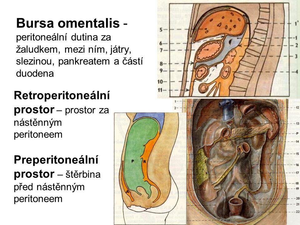 Bursa omentalis - peritoneální dutina za žaludkem, mezi ním, játry, slezinou, pankreatem a částí duodena Retroperitoneální prostor – prostor za nástěnným peritoneem Preperitoneální prostor – štěrbina před nástěnným peritoneem