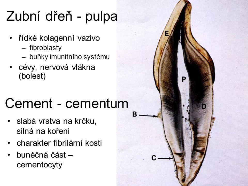 Hrdlo = Fauces isthmus faucium měkké patro = palatum molle –aponeurosis (tvořeno šlachami m.