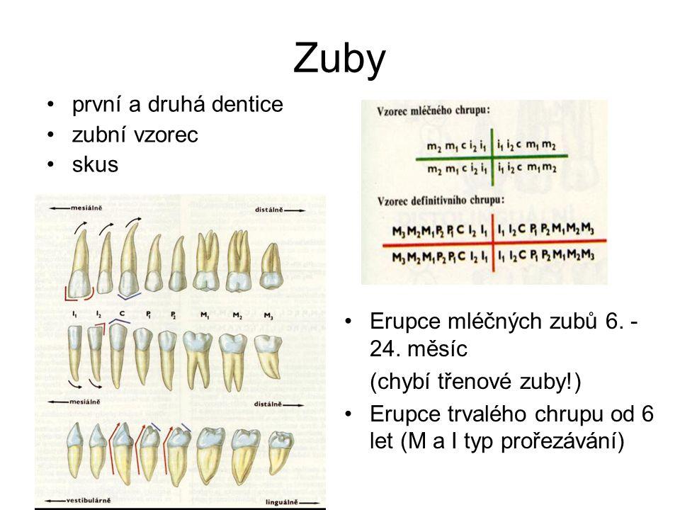 Zuby první a druhá dentice zubní vzorec skus Erupce mléčných zubů 6.