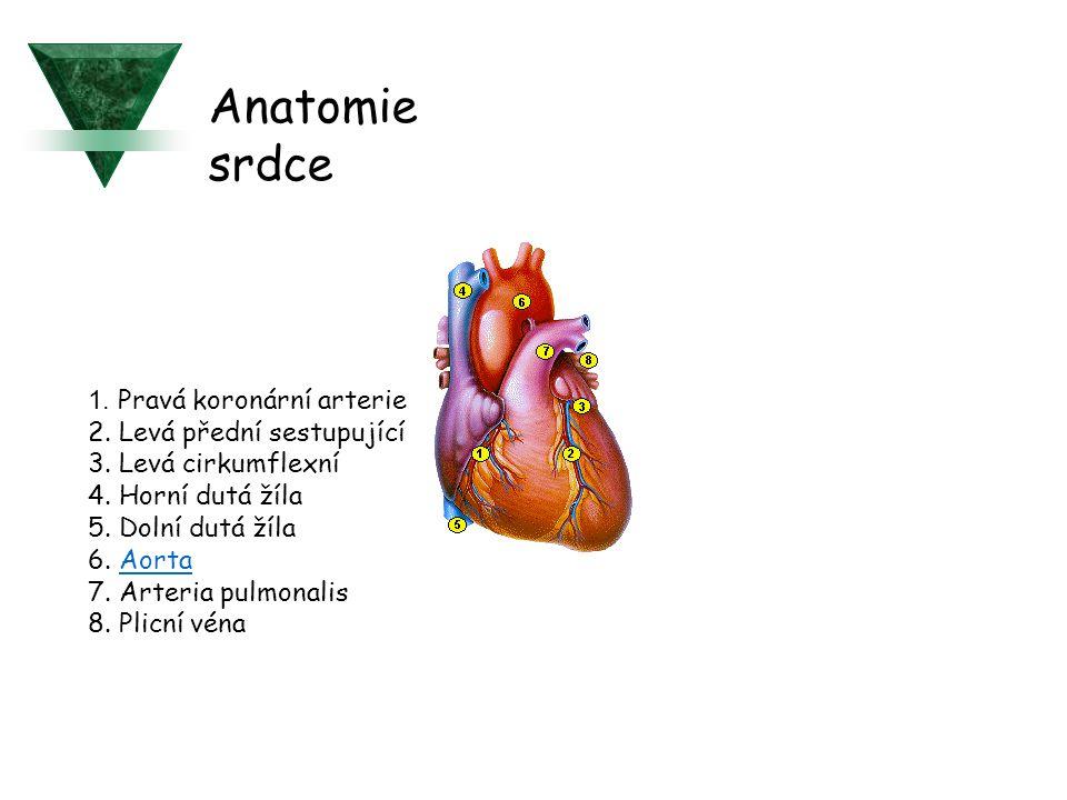 1. Pravá koronární arterie 2. Levá přední sestupující 3. Levá cirkumflexní 4. Horní dutá žíla 5. Dolní dutá žíla 6. AortaAorta 7. Arteria pulmonalis 8