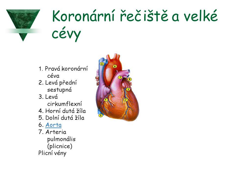 1. Pravá koronární céva 2. Levá přední sestupná 3. Levá cirkumflexní 4. Horní dutá žíla 5. Dolní dutá žíla 6. AortaAorta 7. Arteria pulmonális (plicni