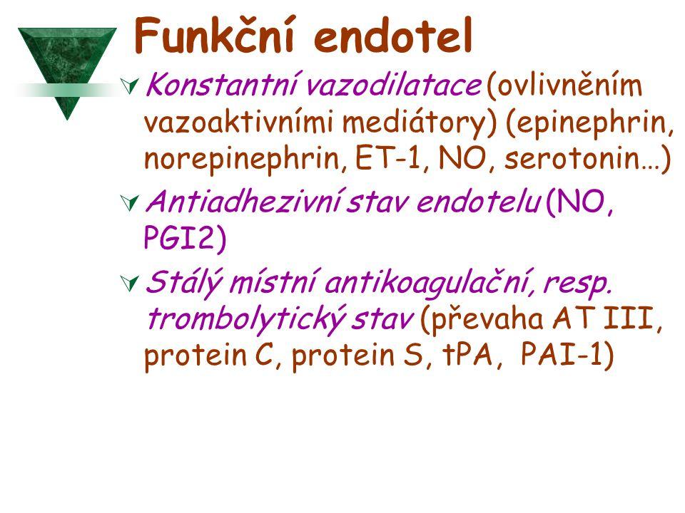 Funkční endotel  Konstantní vazodilatace (ovlivněním vazoaktivními mediátory) (epinephrin, norepinephrin, ET-1, NO, serotonin…)  Antiadhezivní stav