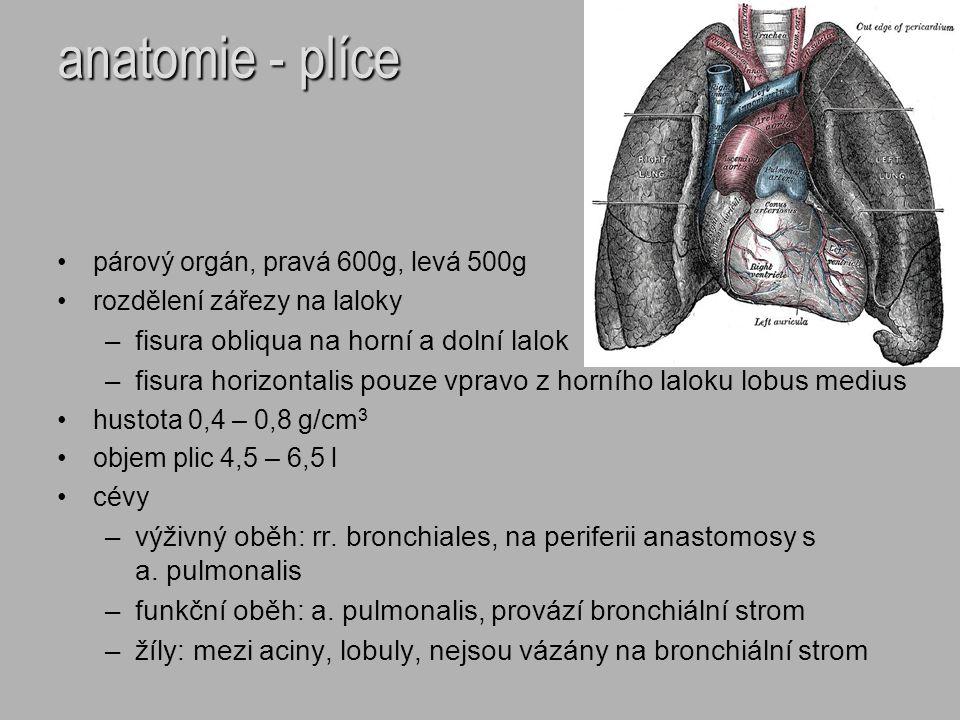 anatomie - plíce párový orgán, pravá 600g, levá 500g rozdělení zářezy na laloky –fisura obliqua na horní a dolní lalok –fisura horizontalis pouze vpra