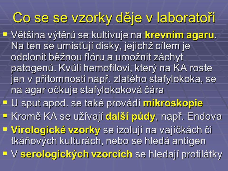 Vyšetření sputa Diagnostické schéma (1)  Den 0: mikroskopie (Gramovo barvení)  Den 1: výsledek primokultivace vzorku na KA, EA a NaCl.