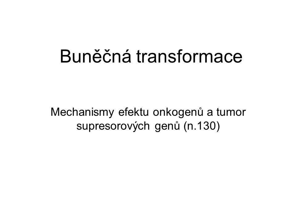 Buněčná transformace Mechanismy efektu onkogenů a tumor supresorových genů (n.130)