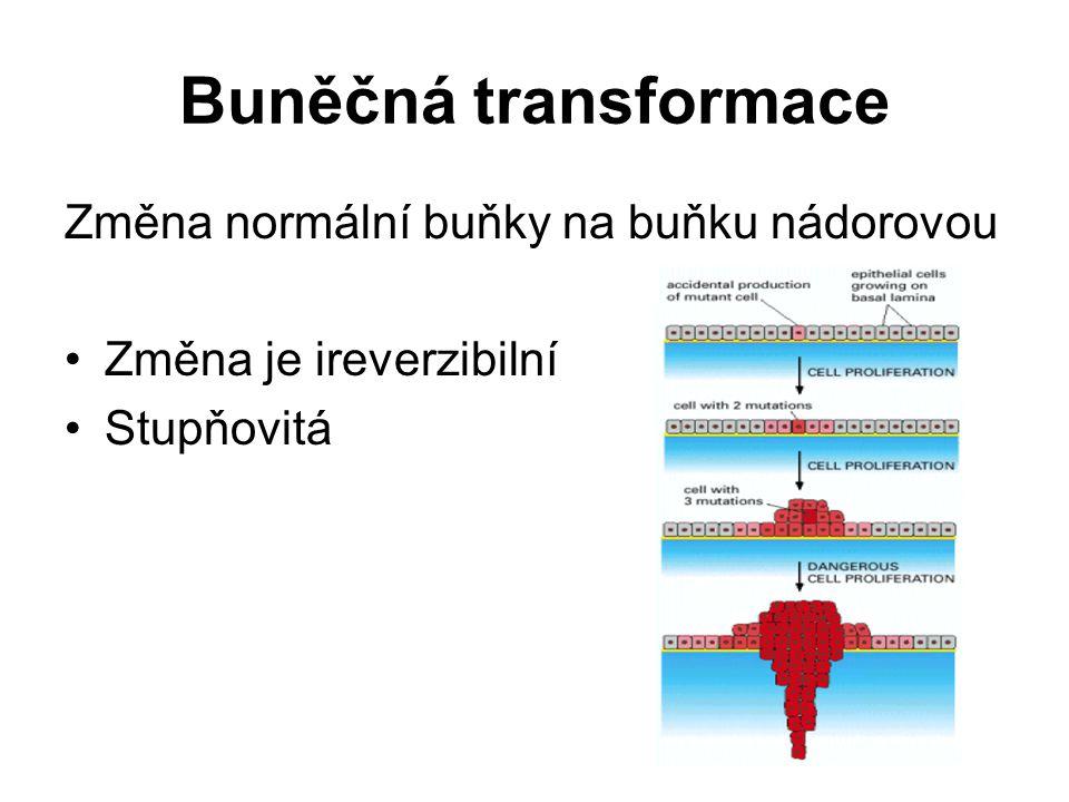 Buněčná transformace Změna normální buňky na buňku nádorovou Změna je ireverzibilní Stupňovitá