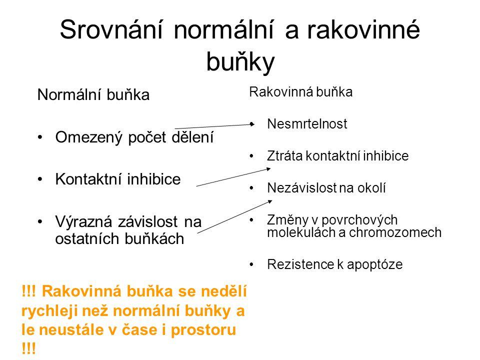 Srovnání normální a rakovinné buňky Normální buňka Omezený počet dělení Kontaktní inhibice Výrazná závislost na ostatních buňkách Rakovinná buňka Nesm