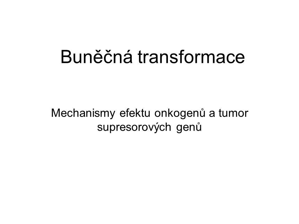 Buněčná transformace Mechanismy efektu onkogenů a tumor supresorových genů