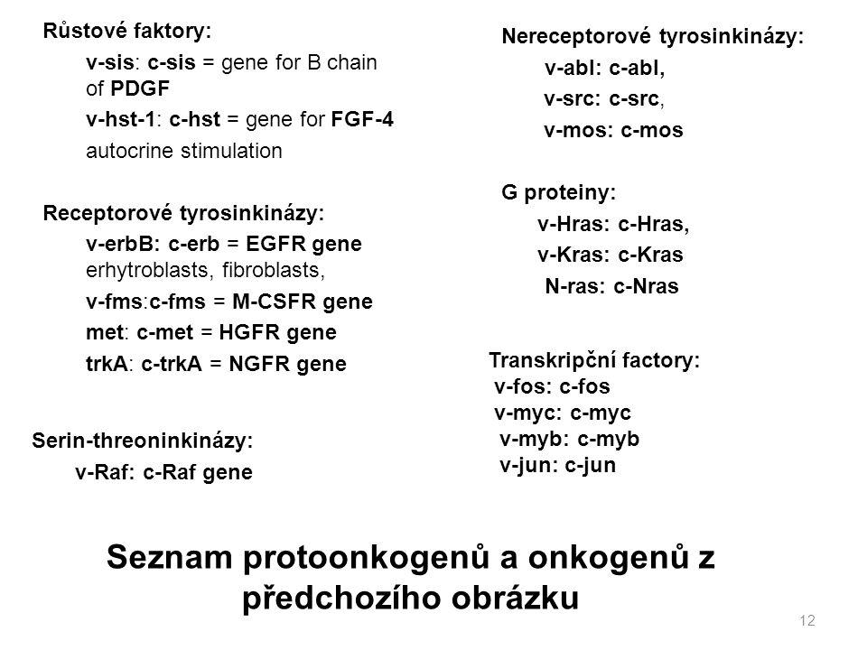 Růstové faktory: v-sis: c-sis = gene for B chain of PDGF v-hst-1: c-hst = gene for FGF-4 autocrine stimulation Receptorové tyrosinkinázy: v-erbB: c-er