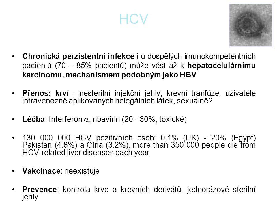 HCV Chronická perzistentní infekce i u dospělých imunokompetentních pacientů (70 – 85% pacientů) může vést až k hepatocelulárnímu karcinomu, mechanism