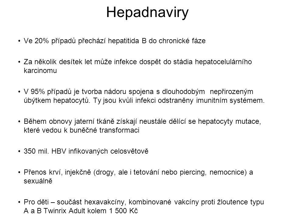 Hepadnaviry Ve 20% případů přechází hepatitida B do chronické fáze Za několik desítek let může infekce dospět do stádia hepatocelulárního karcinomu V