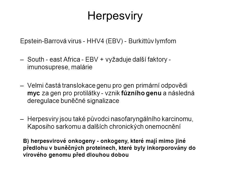 Herpesviry Epstein-Barrová virus - HHV4 (EBV) - Burkittův lymfom –South - east Africa - EBV + vyžaduje další faktory - imunosuprese, malárie –Velmi ča