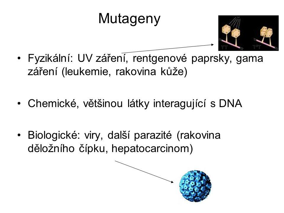 Mutageny Fyzikální: UV záření, rentgenové paprsky, gama záření (leukemie, rakovina kůže) Chemické, většinou látky interagující s DNA Biologické: viry,
