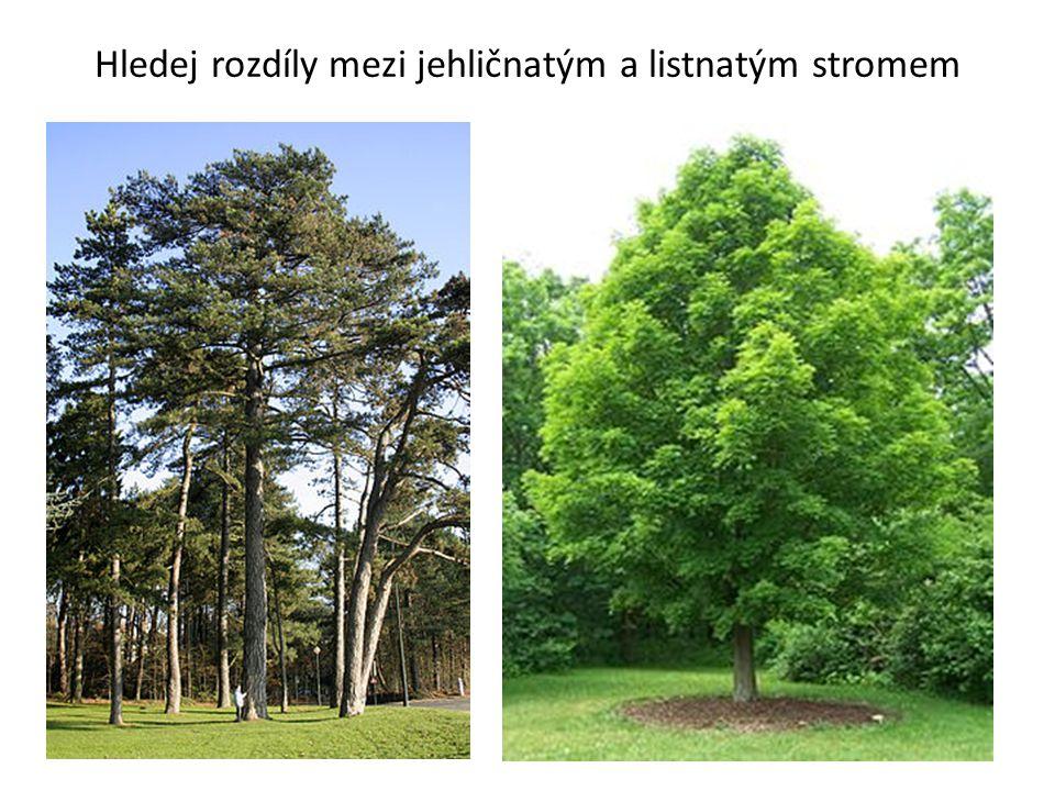 Hledej rozdíly mezi jehličnatým a listnatým stromem