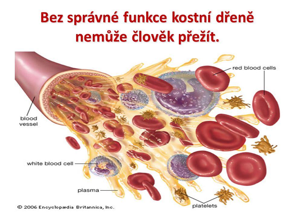 Poruchy funkce kostní dřeně Onemocnění krvetvorby anémie leukémie poruchy metabolismu nádory lymfatické tkáně (lymfomy) poruchy imunity Léčba: chemoterapie – kombinace různých typů léčiv radioterapie – ozařování transplantace KD