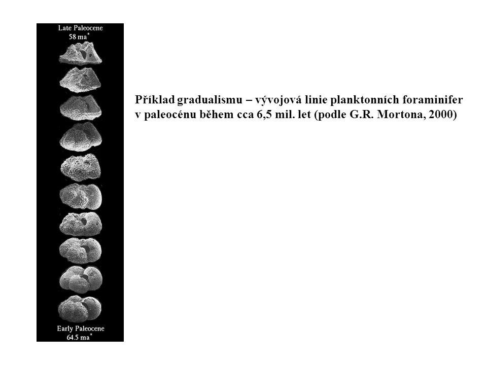 Příklad gradualismu – vývojová linie planktonních foraminifer v paleocénu během cca 6,5 mil. let (podle G.R. Mortona, 2000)
