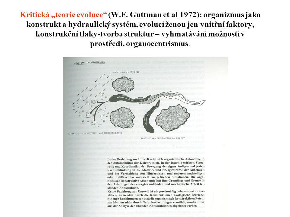 """Kritická """"teorie evoluce"""" (W.F. Guttman et al 1972): organizmus jako konstrukt a hydraulický systém, evoluci ženou jen vnitřní faktory, konstrukční tl"""