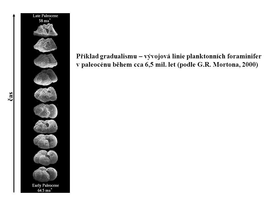 Příklad gradualismu – vývojová linie planktonních foraminifer v paleocénu během cca 6,5 mil. let (podle G.R. Mortona, 2000) čas