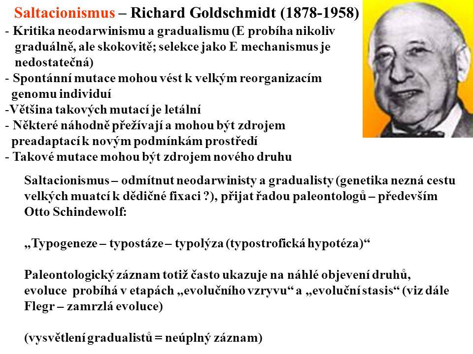 """Saltacionismus – Richard Goldschmidt (1878-1958) - Kritika neodarwinismu a gradualismu (E probíha nikoliv graduálně, ale skokovitě; selekce jako E mechanismus je nedostatečná) - Spontánní mutace mohou vést k velkým reorganizacím genomu individuí -Většina takových mutací je letální - Některé náhodně přežívají a mohou být zdrojem preadaptací k novým podmínkám prostředí - Takové mutace mohou být zdrojem nového druhu Saltacionismus – odmítnut neodarwinisty a gradualisty (genetika nezná cestu velkých muatcí k dědičné fixaci ?), přijat řadou paleontologů – především Otto Schindewolf: """"Typogeneze – typostáze – typolýza (typostrofická hypotéza) Paleontologický záznam totiž často ukazuje na náhlé objevení druhů, evoluce probíhá v etapách """"evolučního vzryvu a """"evoluční stasis (viz dále Flegr – zamrzlá evoluce) (vysvětlení gradualistů = neúplný záznam)"""