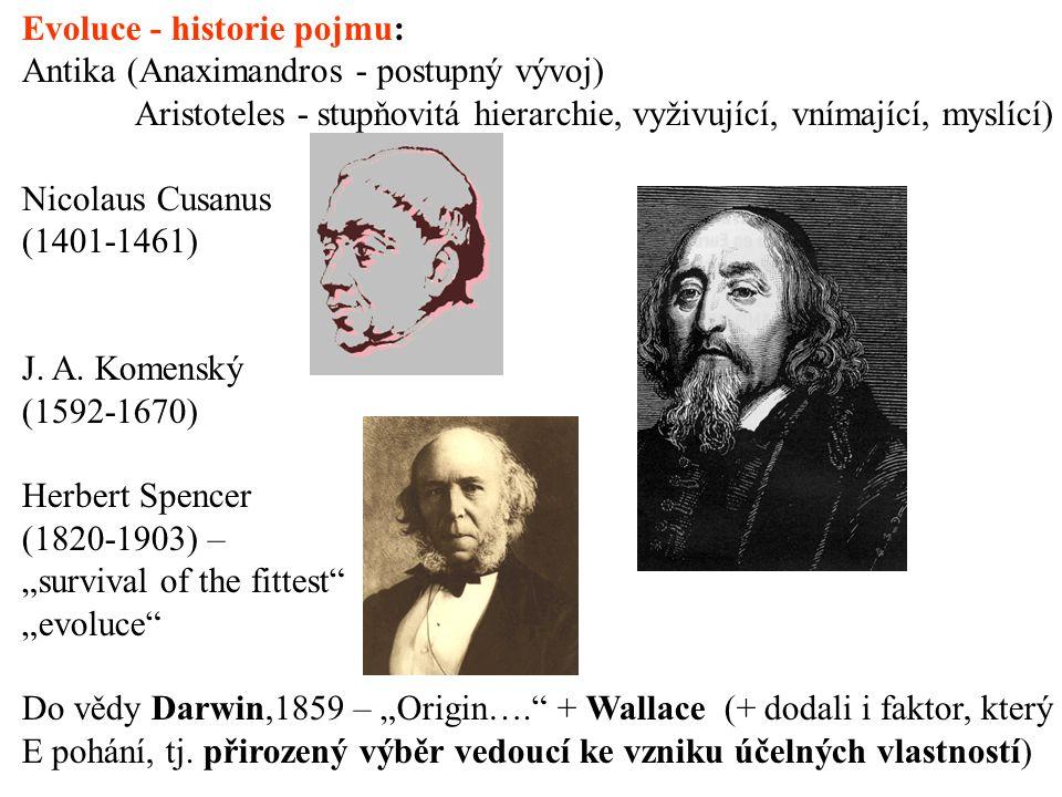 Evoluce - historie pojmu: Antika (Anaximandros - postupný vývoj) Aristoteles - stupňovitá hierarchie, vyživující, vnímající, myslící) Nicolaus Cusanus (1401-1461) J.