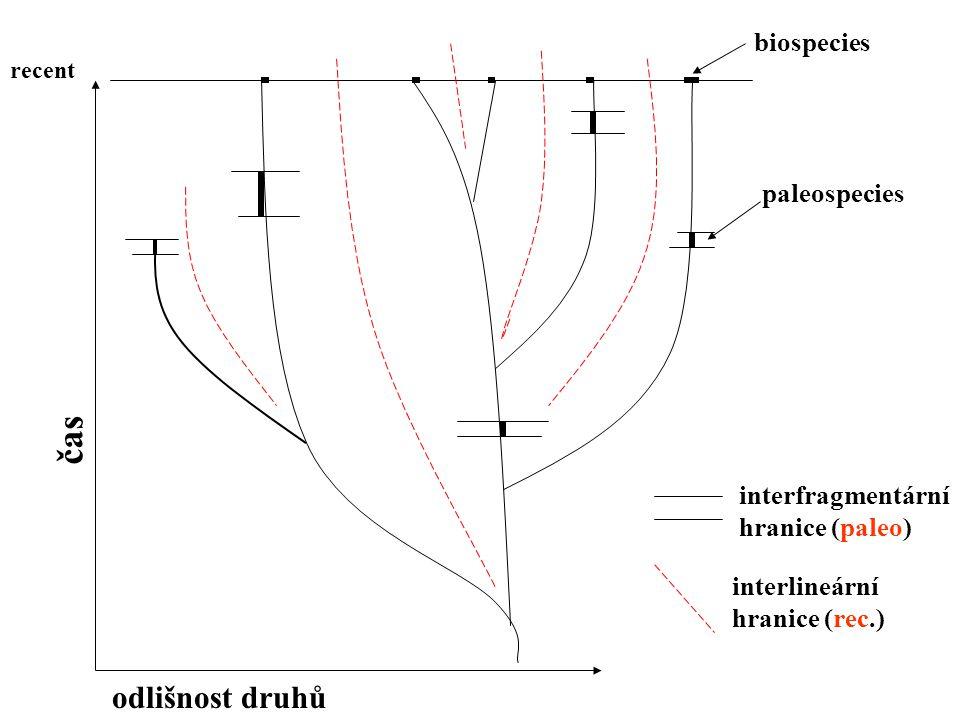 biospecies paleospecies interfragmentární hranice (paleo) interlineární hranice (rec.) čas odlišnost druhů recent