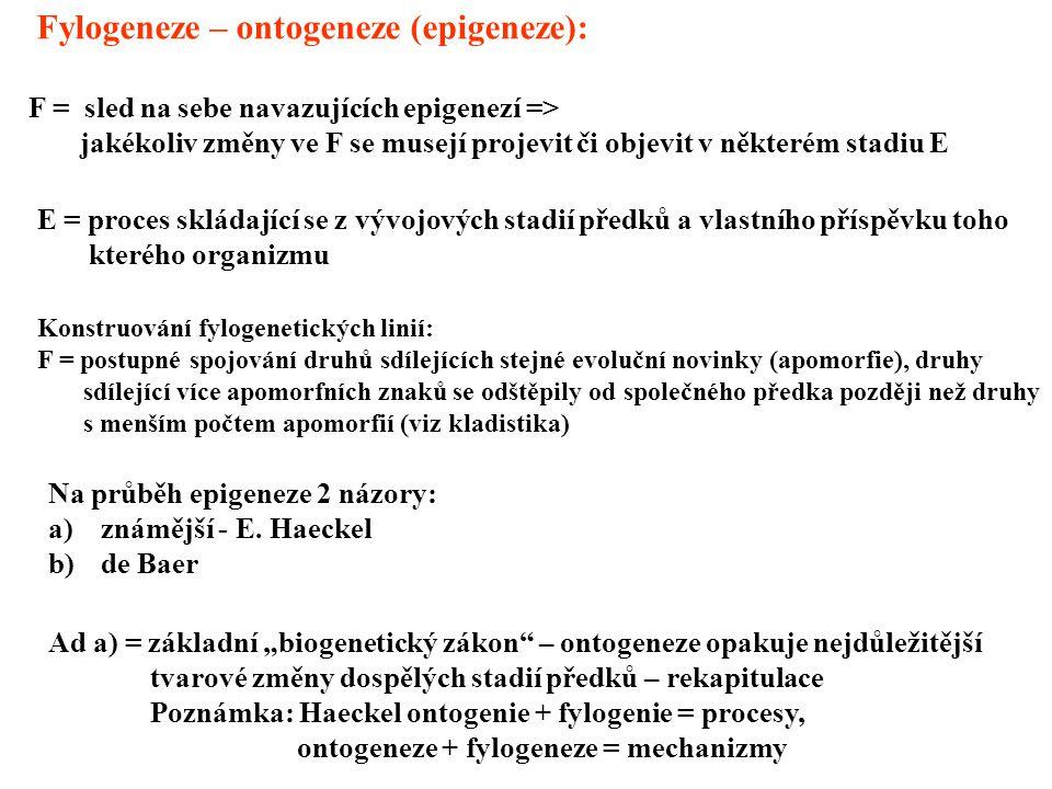 Fylogeneze – ontogeneze (epigeneze): F = sled na sebe navazujících epigenezí => jakékoliv změny ve F se musejí projevit či objevit v některém stadiu E