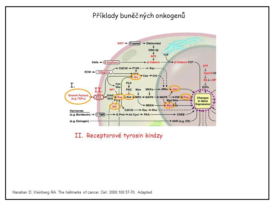 Příklady buněčných onkogenů Hanahan D, Weinberg RA. The hallmarks of cancer. Cell. 2000;100:57-70, Adapted II. Receptorové tyrosin kinázy I. II.